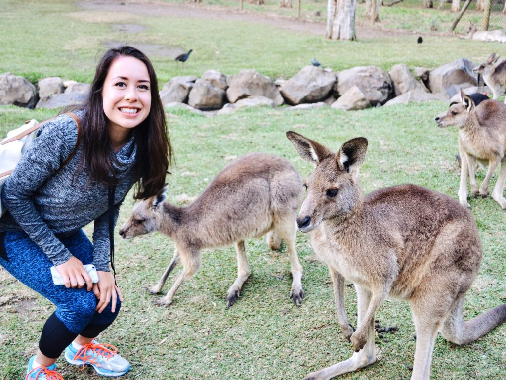 Kangaroos in Australia at Currumbin Wildlife Sanctuary