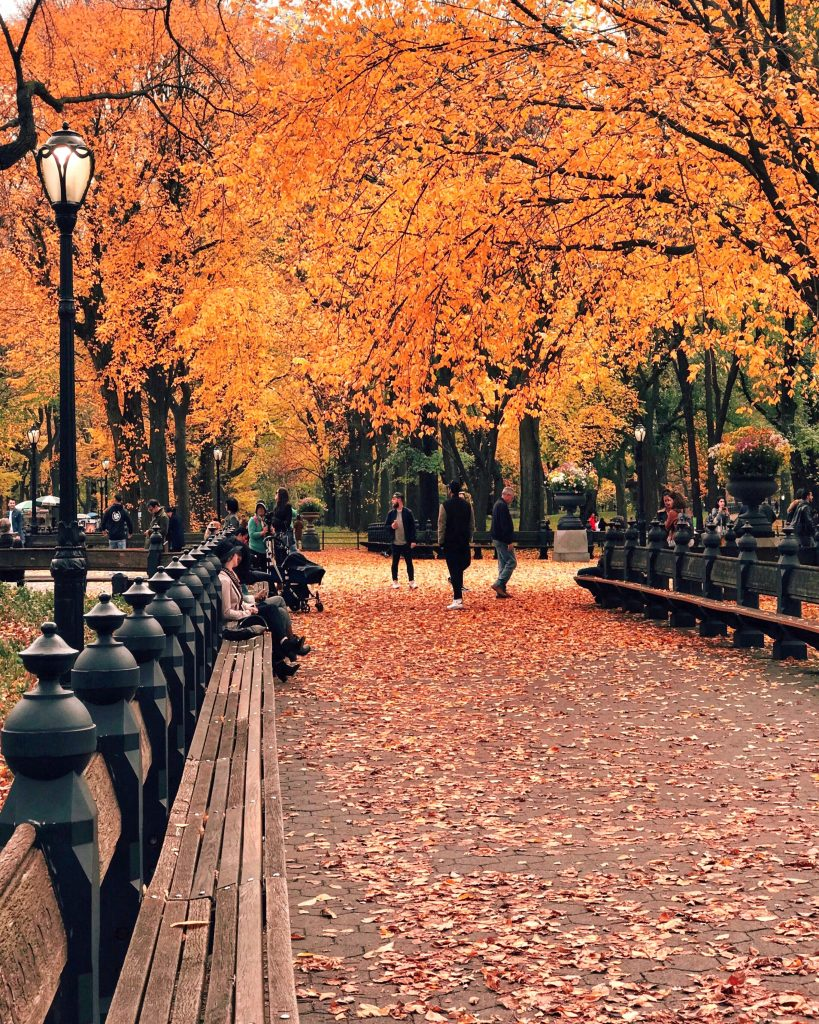 The Mall, Central Park, NYC Fall